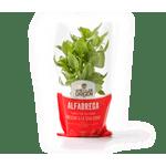 471-planta-alfabrega