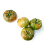 tomaquet-verd-extra